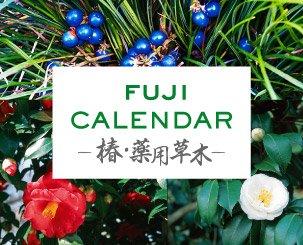 富士精版カレンダー 椿・薬用草木